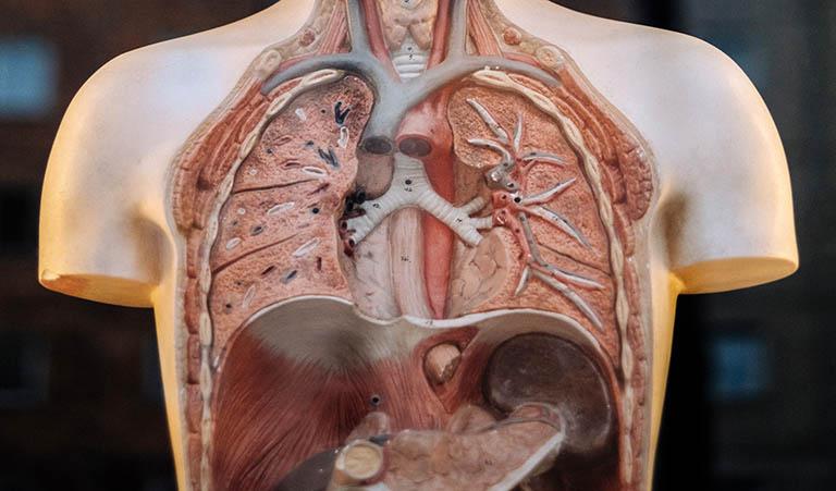 sjarmen-med-tarmen