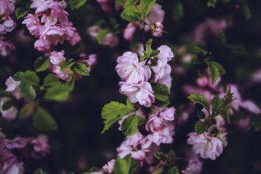 hverdagslyrikk-våren-hvor-jeg-kommer-fra