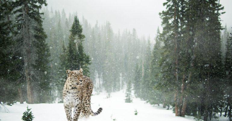 beste-sider-for-gratisbilder-på-nett